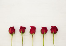 red long stem rose against a white wood background.