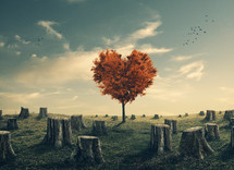 heart shape tree among tree stumps