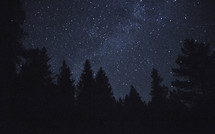 stars in a night sky and trees