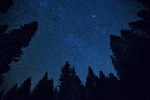 stars in a night sky and tall trees