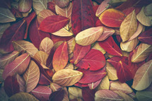 Fall leaves.