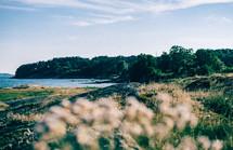 coastal flowers along a shoreline