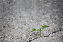 a sprout growing in a crack in a sidewalk