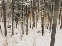 A forest covered in snow.
