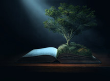 sunlight shining on a tree growing on a Bible