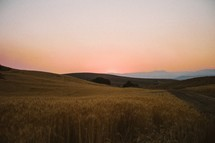 rolling hills of wheat