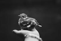 a hand holding a baby bird