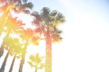 palm trees under bright sunlight