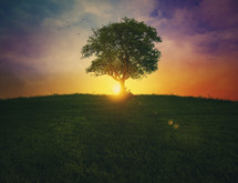 The sun setting behind an isolated tree.