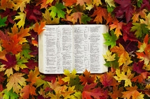 an open Bible in fall leaves