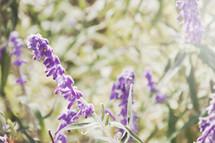 Sunshine on flowers in summer field