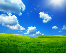 green grass and blue sky on a sunny day