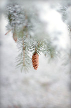 Nature pinecone in snow