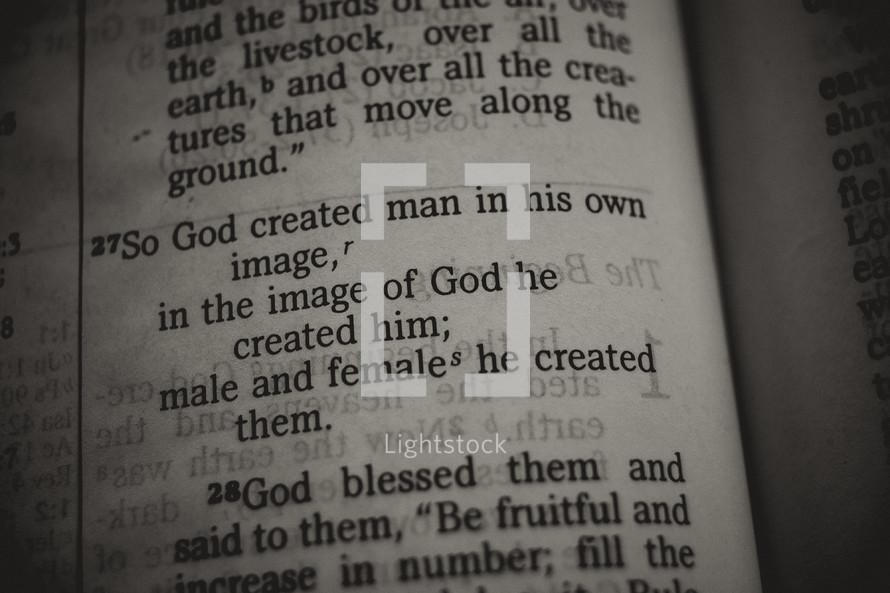 Genesis scripture verse close up