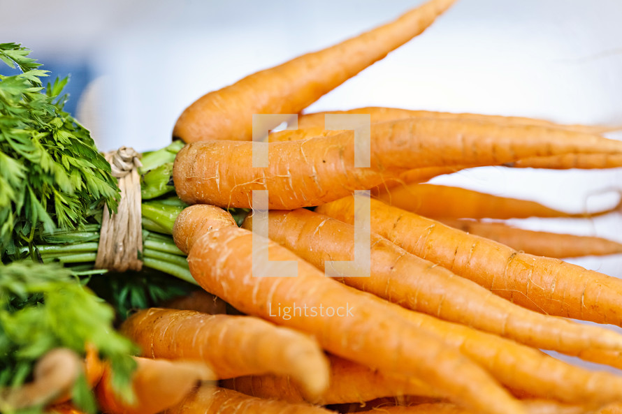 A bunch of carrots fresh garden