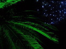 Palm Fronds and Christmas lights - A tropical Christmas display of lighted green palm fronds and decorative blue and white Christmas lights in the background in an outdoor Christmas display.