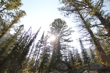 sunlight shining into a forest and a man sitting in silence
