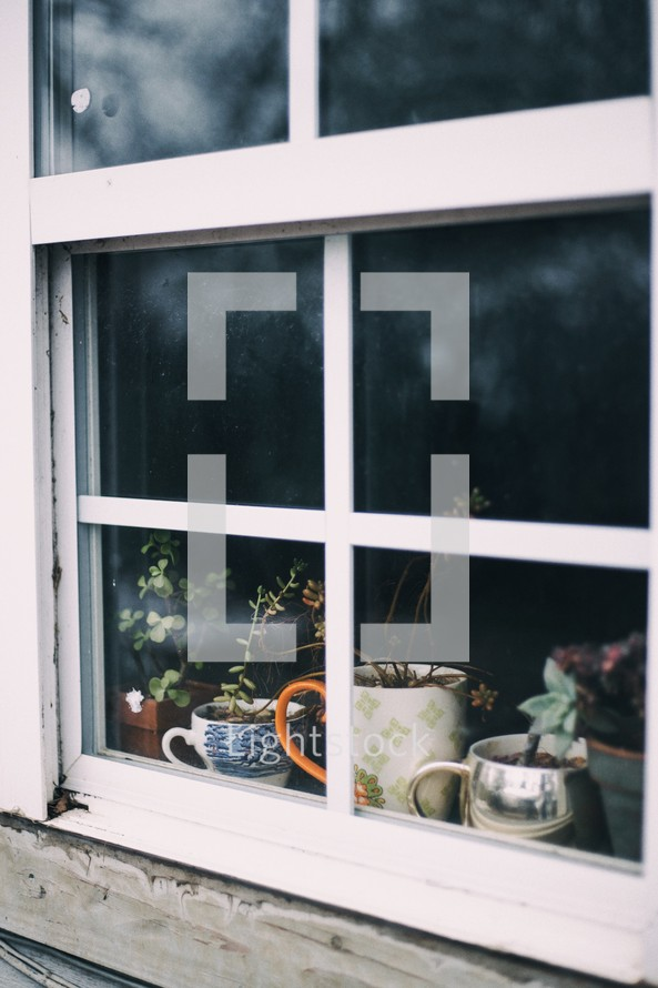 Potted plants seen through a window.