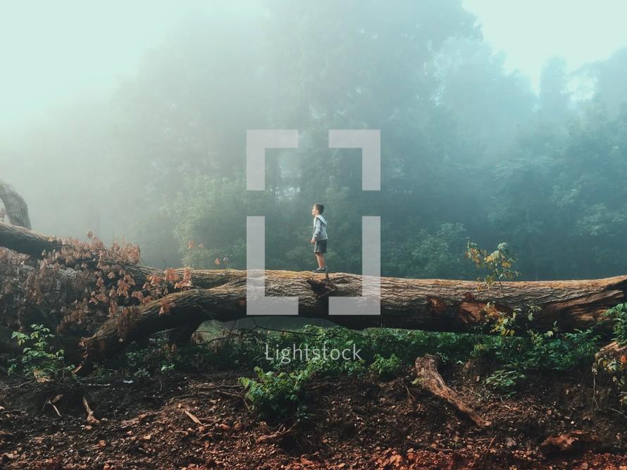 A boy walking along a fallen tree trunk.