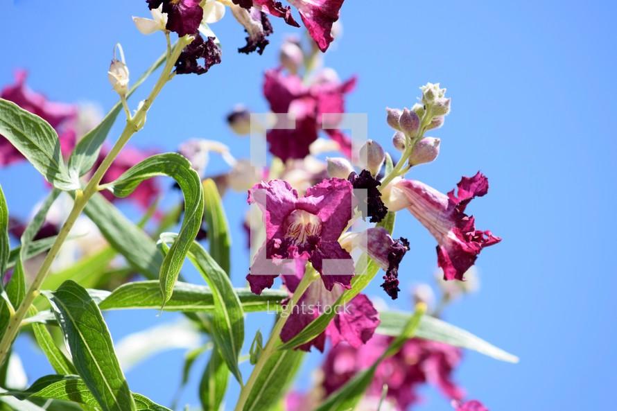 desert flowers in bloom