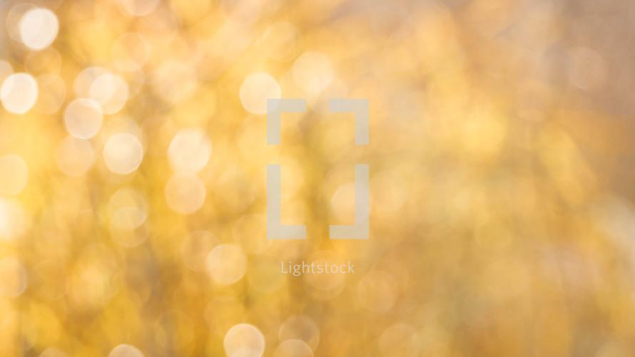 bokeh white lights in gold