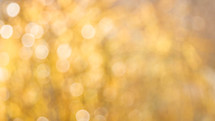 bokeh white lights in gold