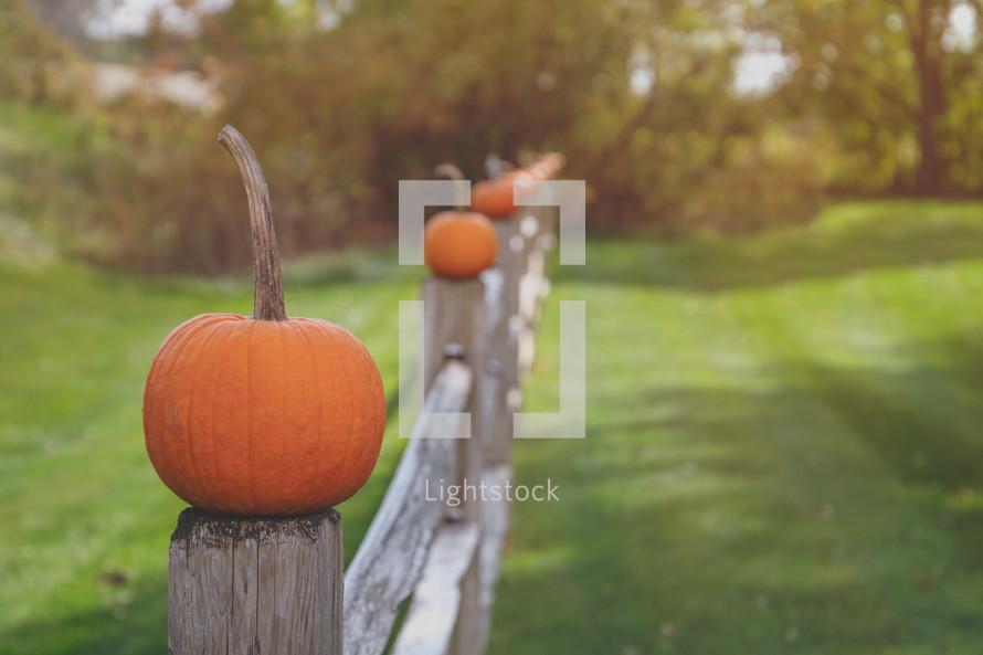 orange fall pumpkins on a fence