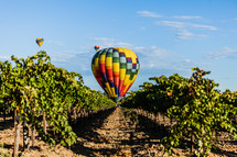 Hot air balloon landing in grape vineyard with two additional balloons in background napa valley California harvest wine