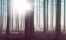 sunlight shining into a forest