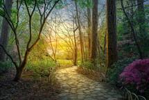 A beautiful pathway through the garden at sunset
