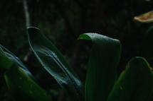 wet tropical plants