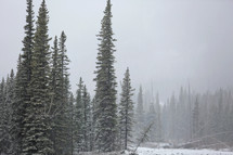 a misty snowy day in the mountains with forest trees