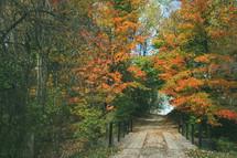 dirt road through a fall forest