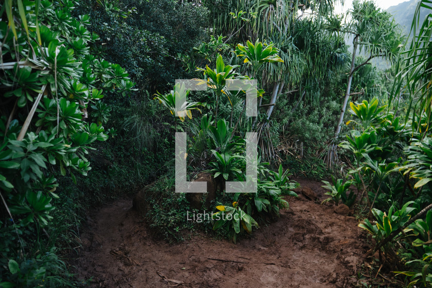 plants in a jungle