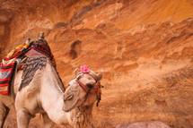 saddle on a camel in Petra Jordan