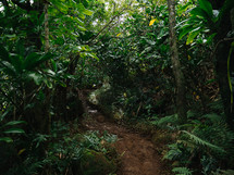 trail through a jungle