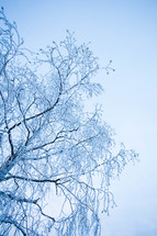 Ice on a tree.