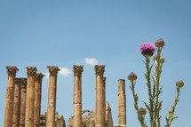 pink flowers and ancient columns