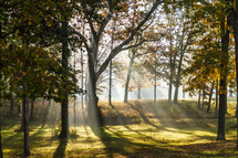 sunlight shining on grass and fall trees on a hill