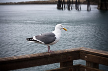 Seagull perched on wooden railing of deck overlooking water.