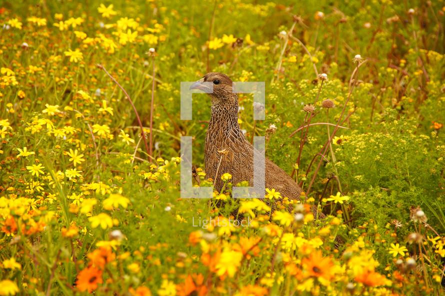 A bird amongst wildflowers