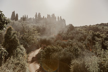 fog rising over the trees and a house in Italy