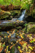 Trillium falls and fall leaves