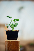 potted vegetable plant for a garden