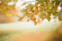 fall leaves on a tree