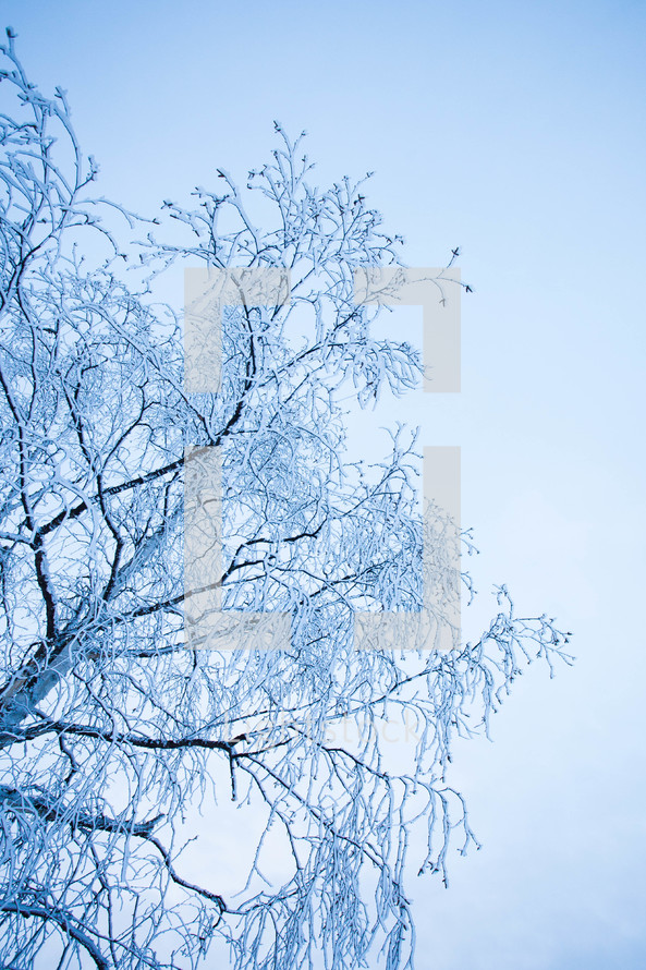 ice on a winter tree