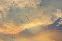 flock of birds in the sky at sunset