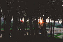 Sunset through the trees in a park.