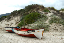 old fish in boats on a beach