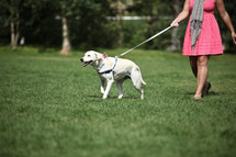 Woman in pink dress walking dog across grassy lawn.